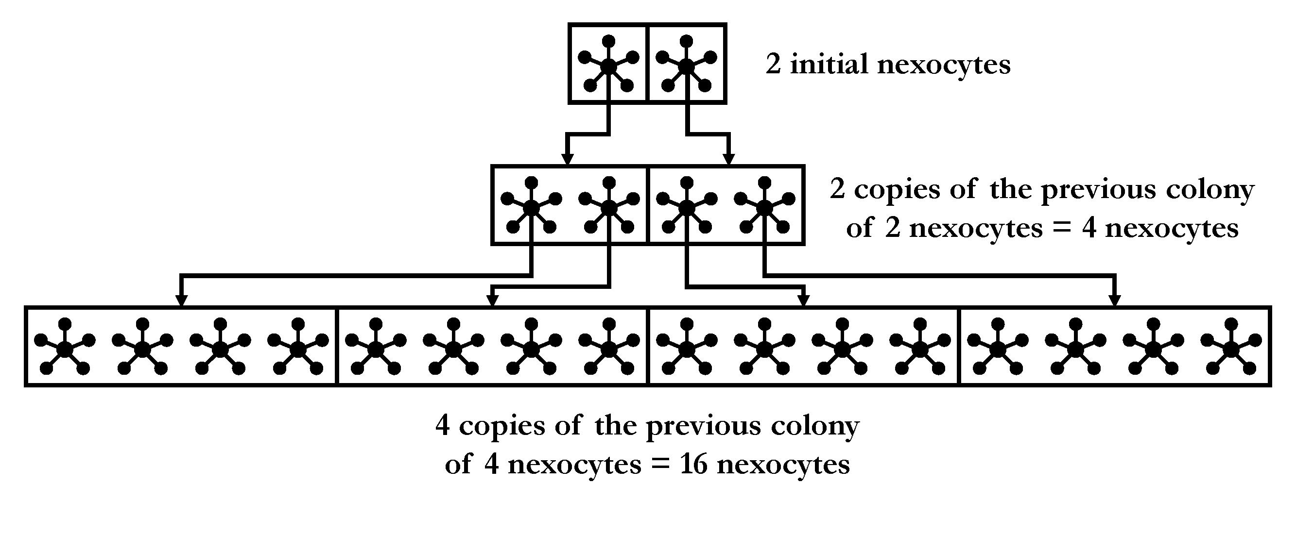 Nexocyte Cycle